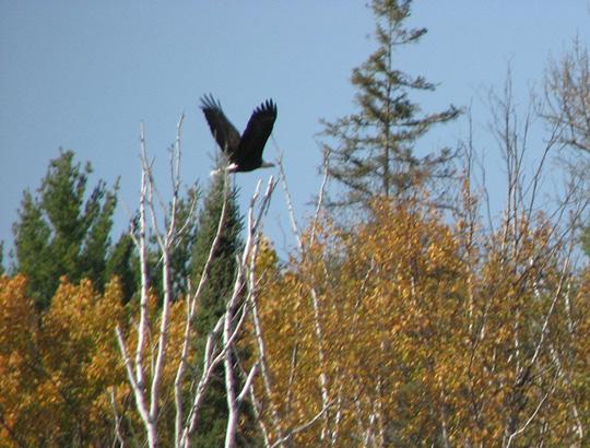 Guiding Eagle
