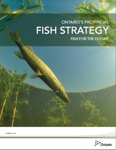 FishStrategy