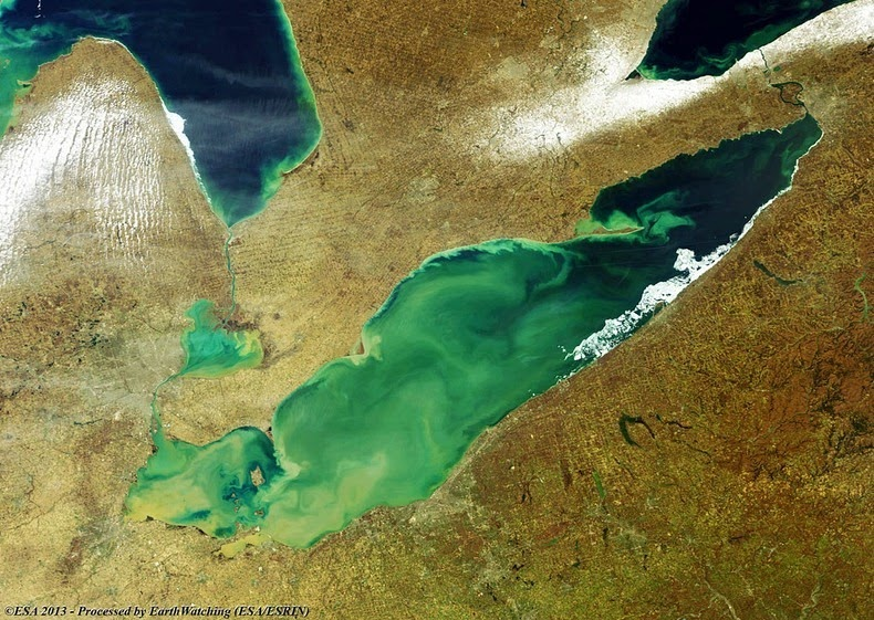 lake-erie-algae-4[2]