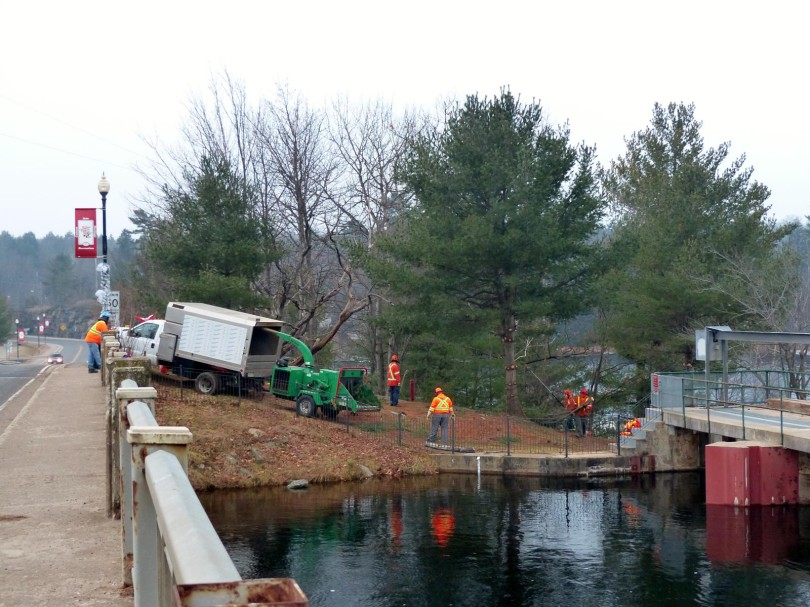 Tree Removal at Bala Falls