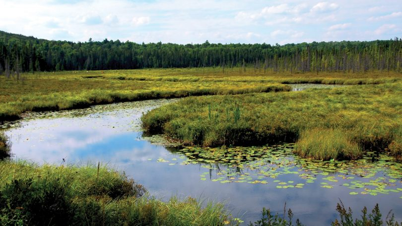 957997-wetlands