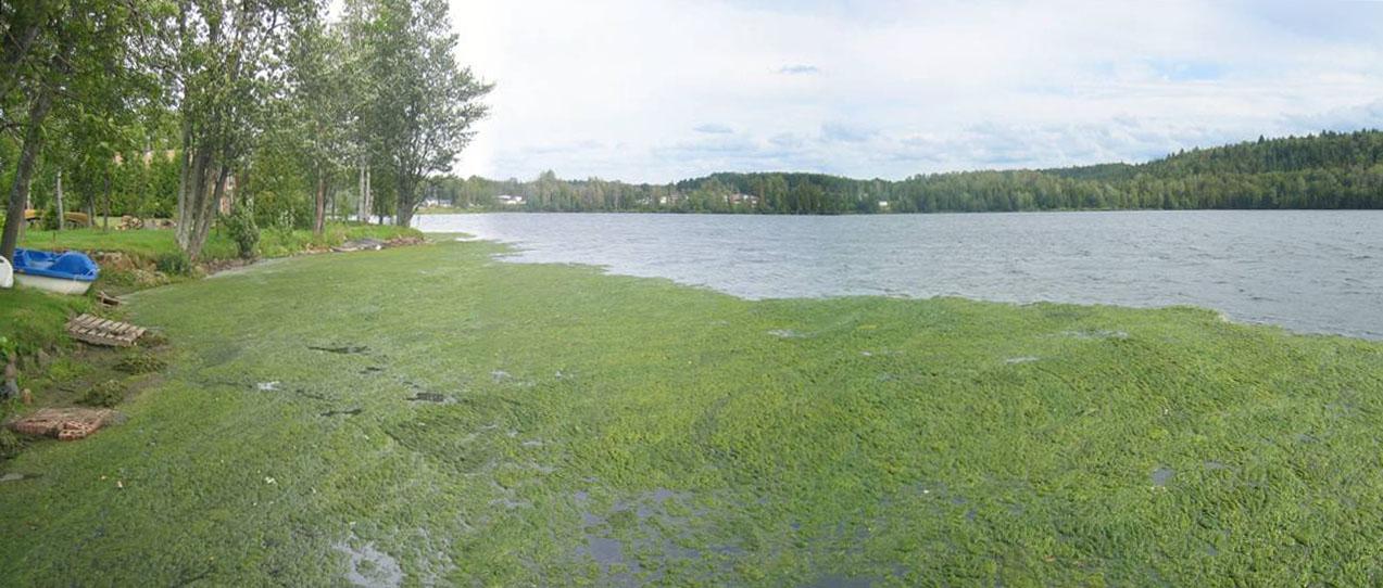 Algae Ontario Rivers Alliance